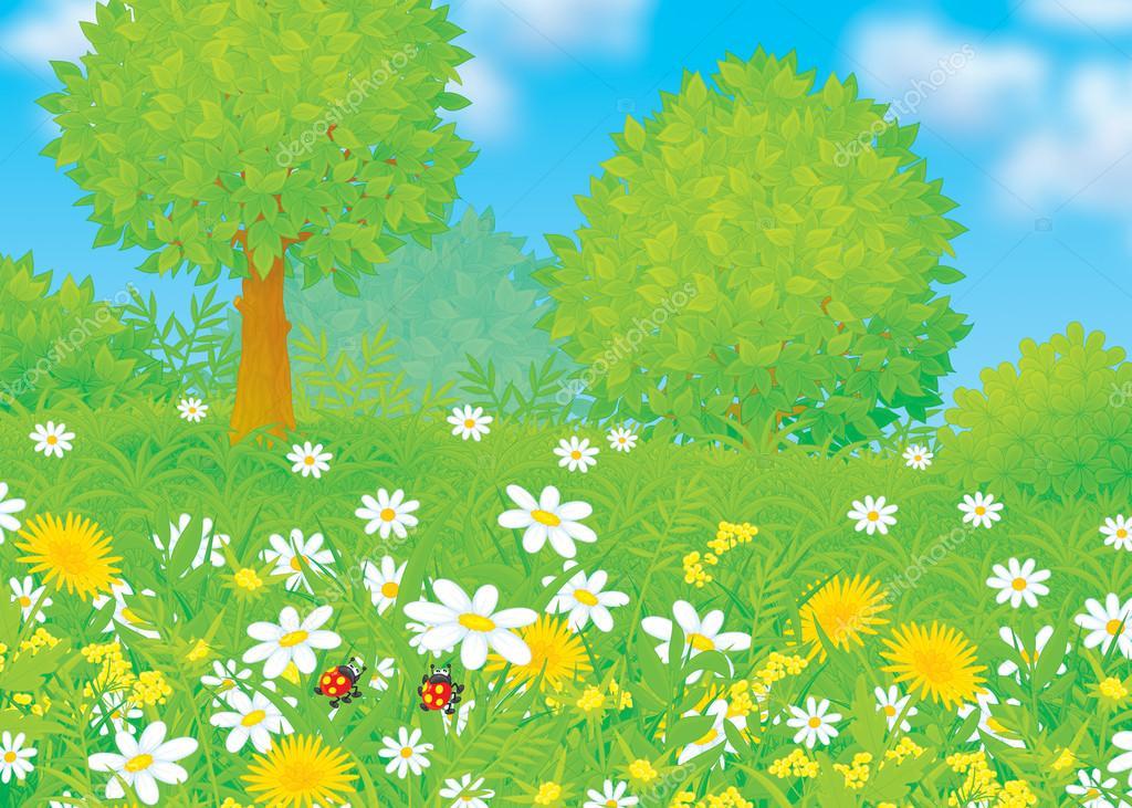 wild daisies and dandelion flowers