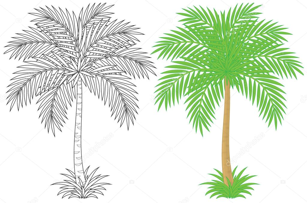 image relating to Palm Tree Printable titled Visuals: printable palm trees Pointed out and coloured palm