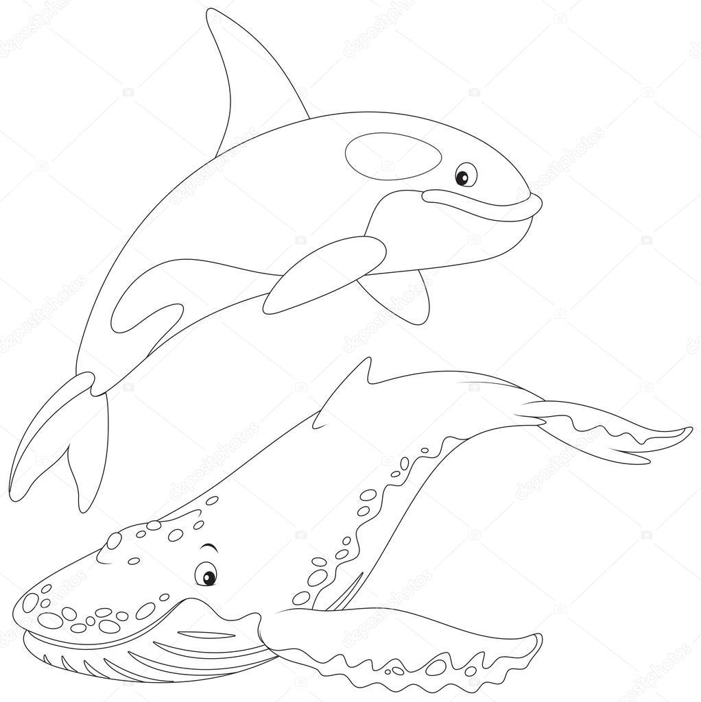 orcas y ballenas Jorobada — Vector de stock © AlexBannykh #40615981