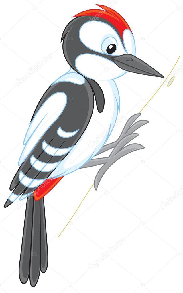 Dibujos Pájaro Carpintero Dibujo Pájaro Carpintero Vector De