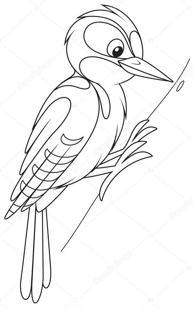 Imágenes Pajaro Carpintero En Blanco Y Negro Pájaro Carpintero