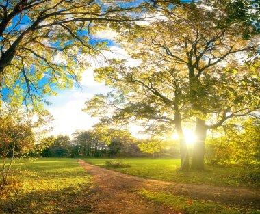 Autumn park natural landscape stock vector