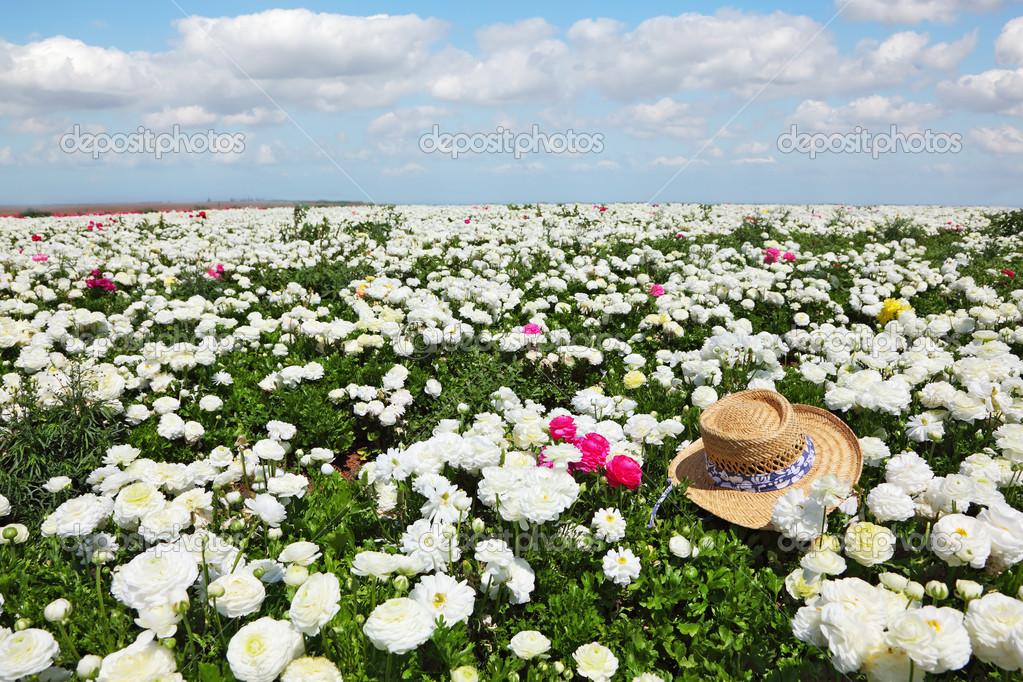 The hat on field of white flowers stock photo kavramm 22935966 the hat on field of white flowers stock photo mightylinksfo