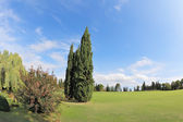 Fotografie Two cypress on a green grassy lawn