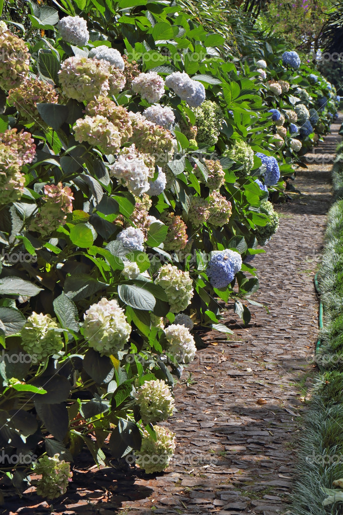 The flowering shrubs along the paths