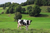 Fotografia pastorale in Provenza