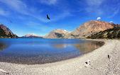 Fotografia Condor predatori gira sul lago