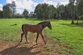 Penzion pro chov arabských koní