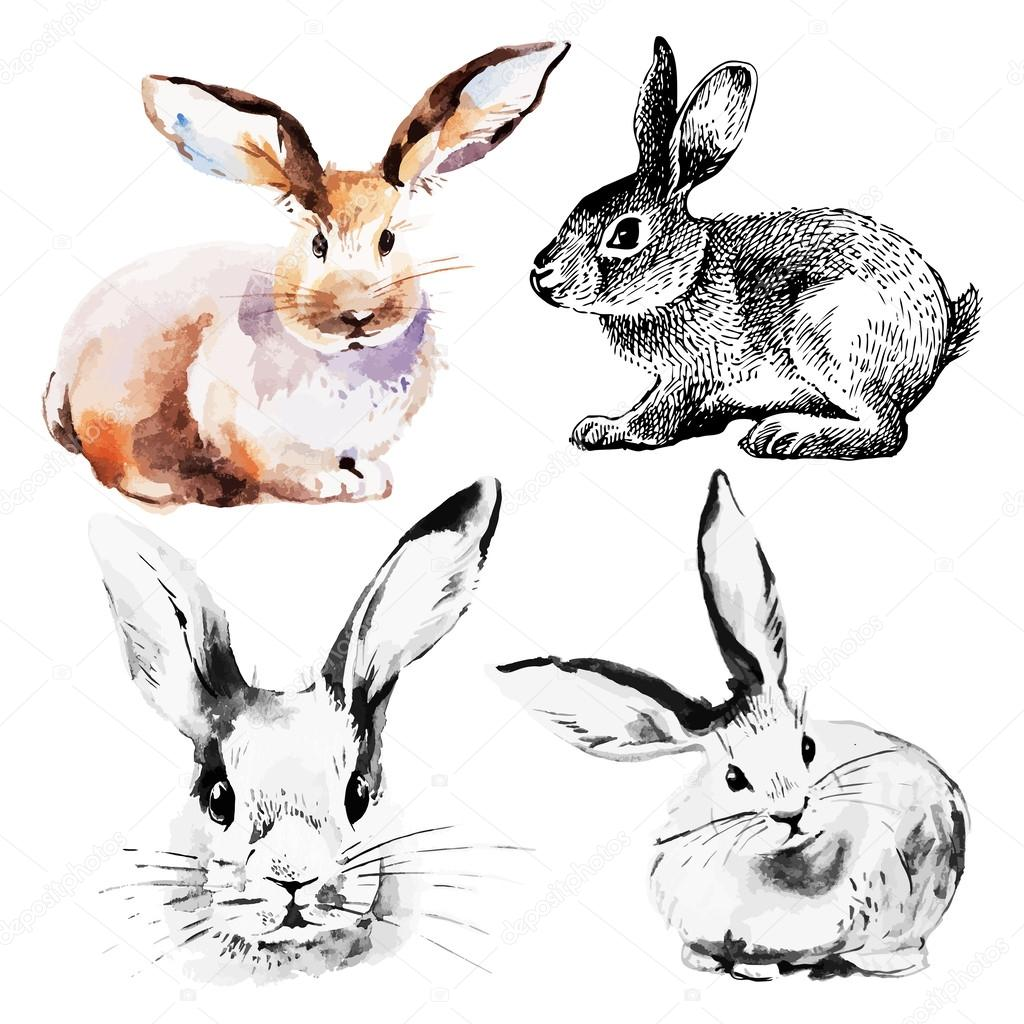 Áˆ Bunny Rabbit Stock Drawings Royalty Free Bunny Rabbit Images Vectors Download On Depositphotos