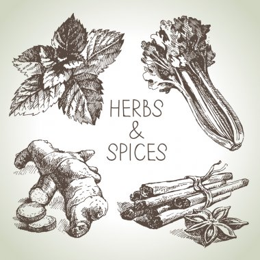Kitchen herbs and spices.