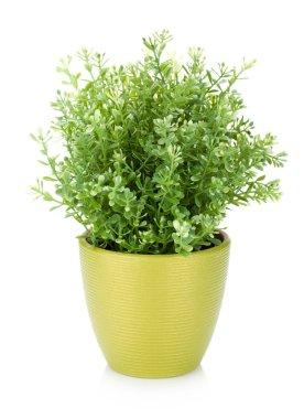 Decorative flower in flowerpot