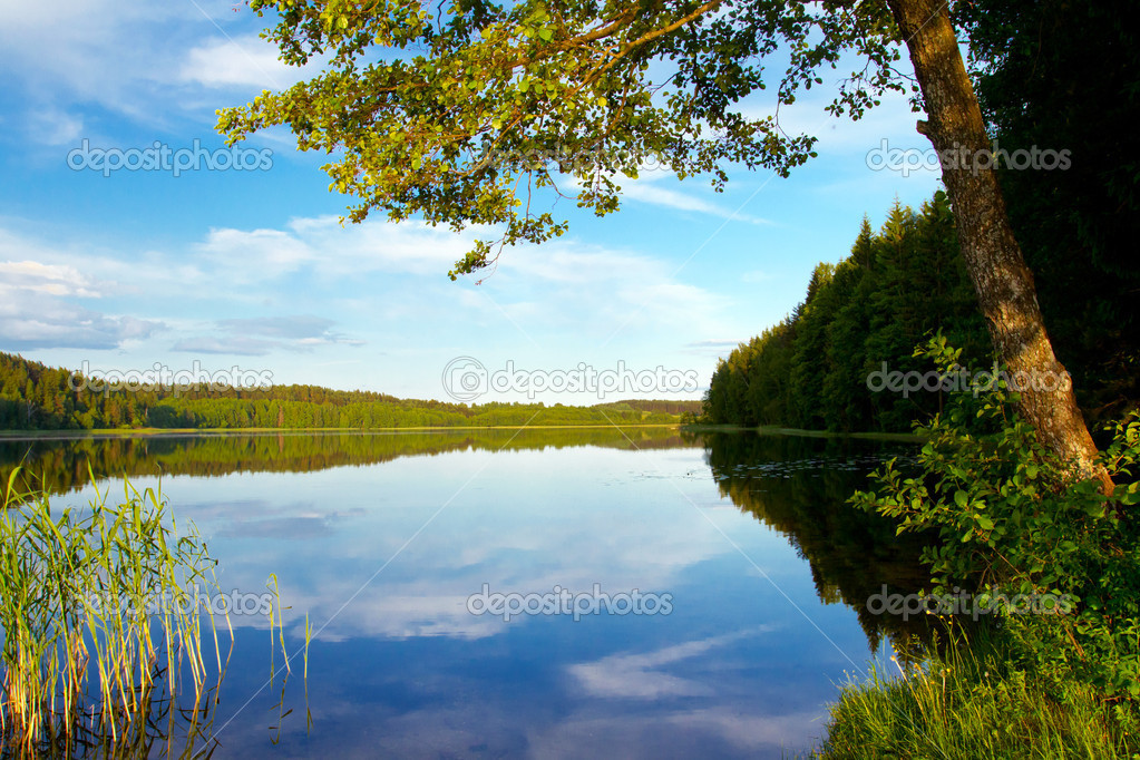 Forest lake, summer landscape