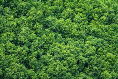 Green trees forest background, view from above