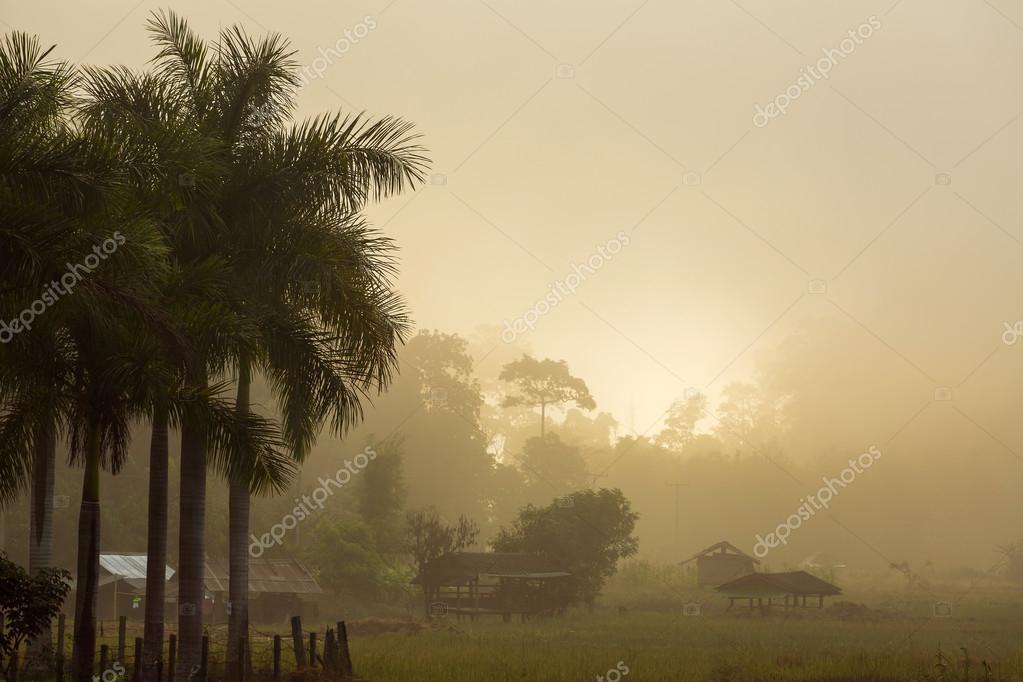 Misty sunrise in the tropics