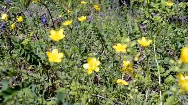 divoké květy na jaře