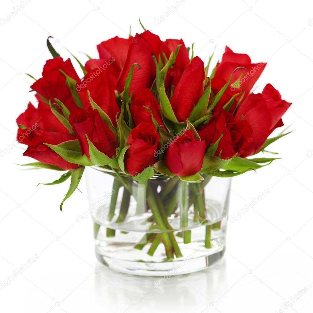 Bellissime rose rosse foto stock klenova 25017145 for Foto di rose bellissime