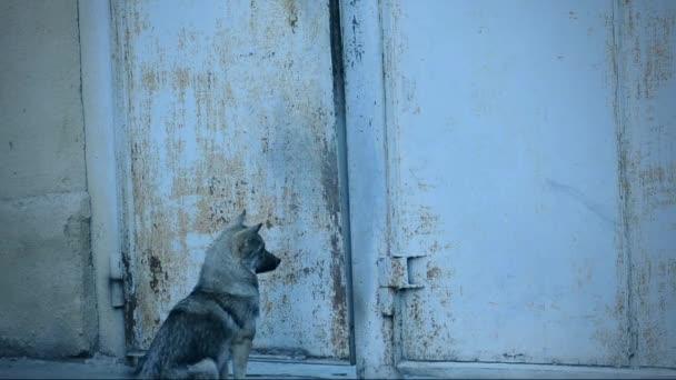 psí povaha