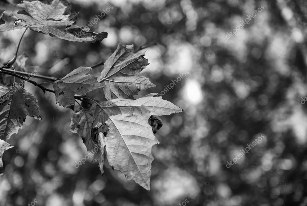 Autumn leaves with tree on background