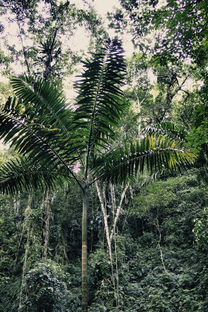 Typical Landscape in Ocho Rios