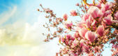 Fotografie květ magnolie strom s barevnou oblohou na pozadí