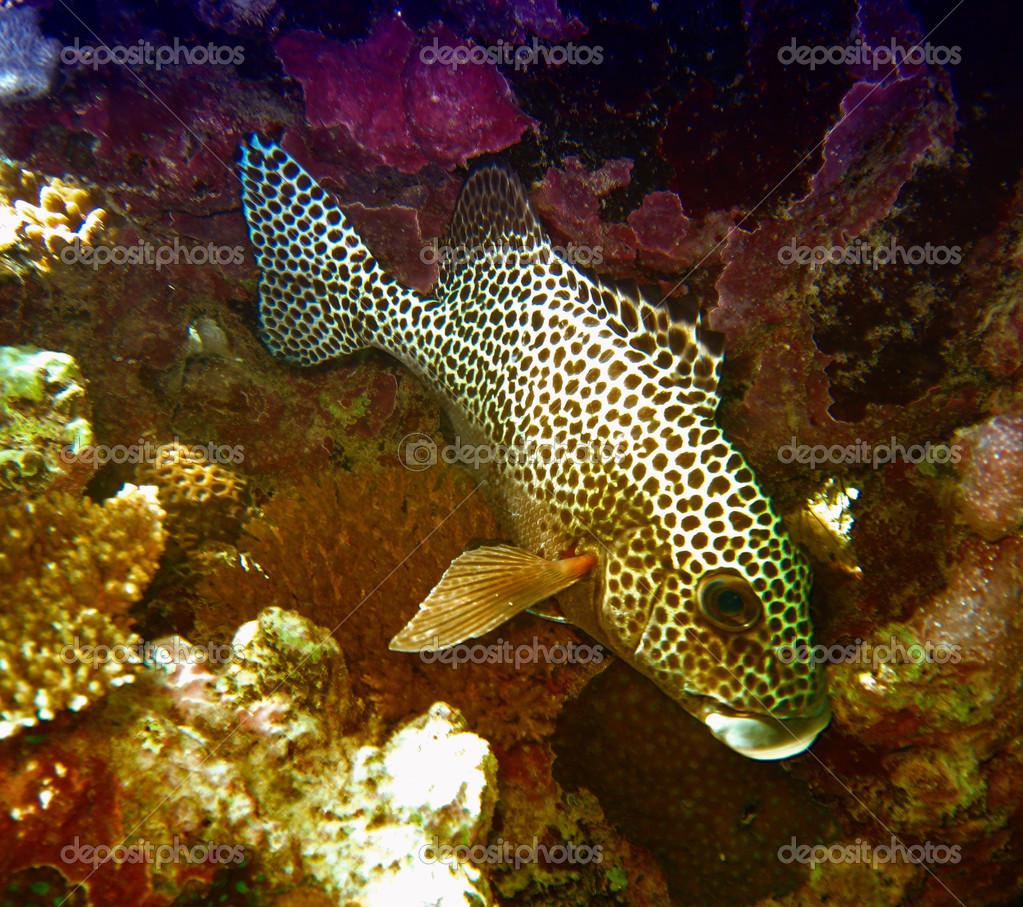 schöne Farben von Korallenriff, große Fische — Stockfoto © jovannig ...