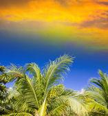 při západu slunce obloha nad palmy.