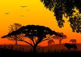 Afrika krajina