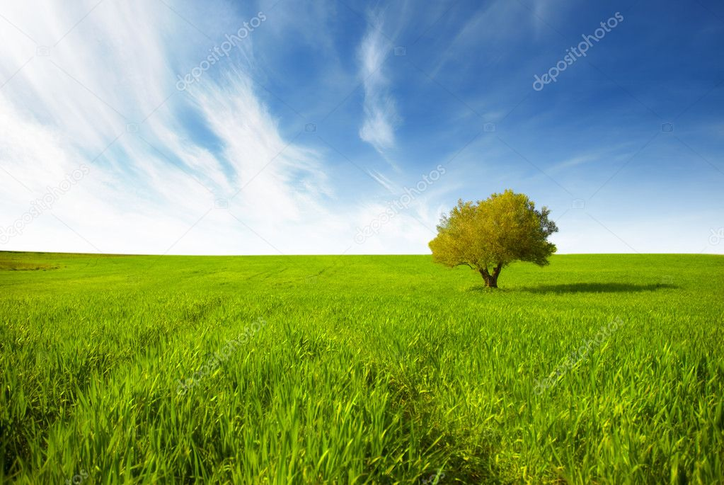 Green landscape with isolated tree
