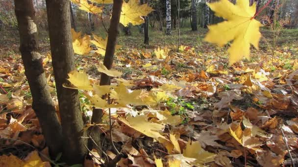őszi fa.