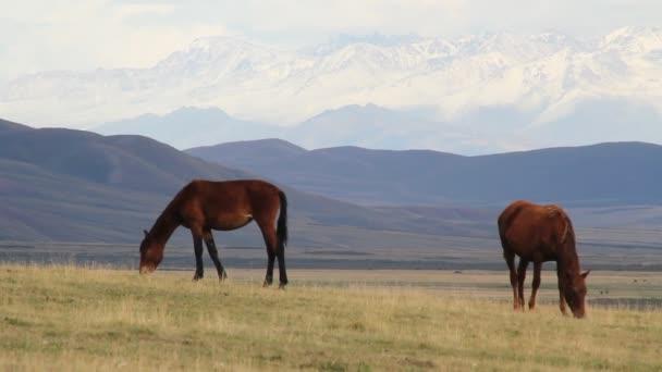 The Horses.