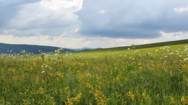 Green grass, yellow buttercups and other wild flowers in on a perfect summer day