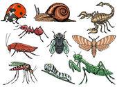Fotografia insieme di insetti