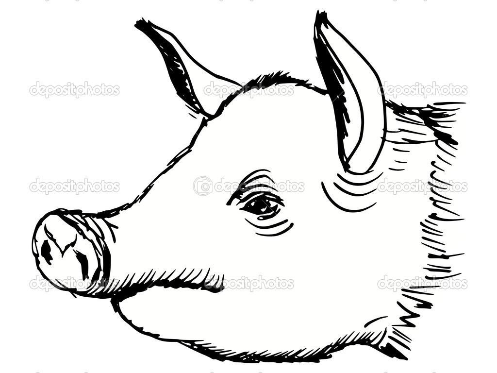 Cabeza De Cerdo — Vector De
