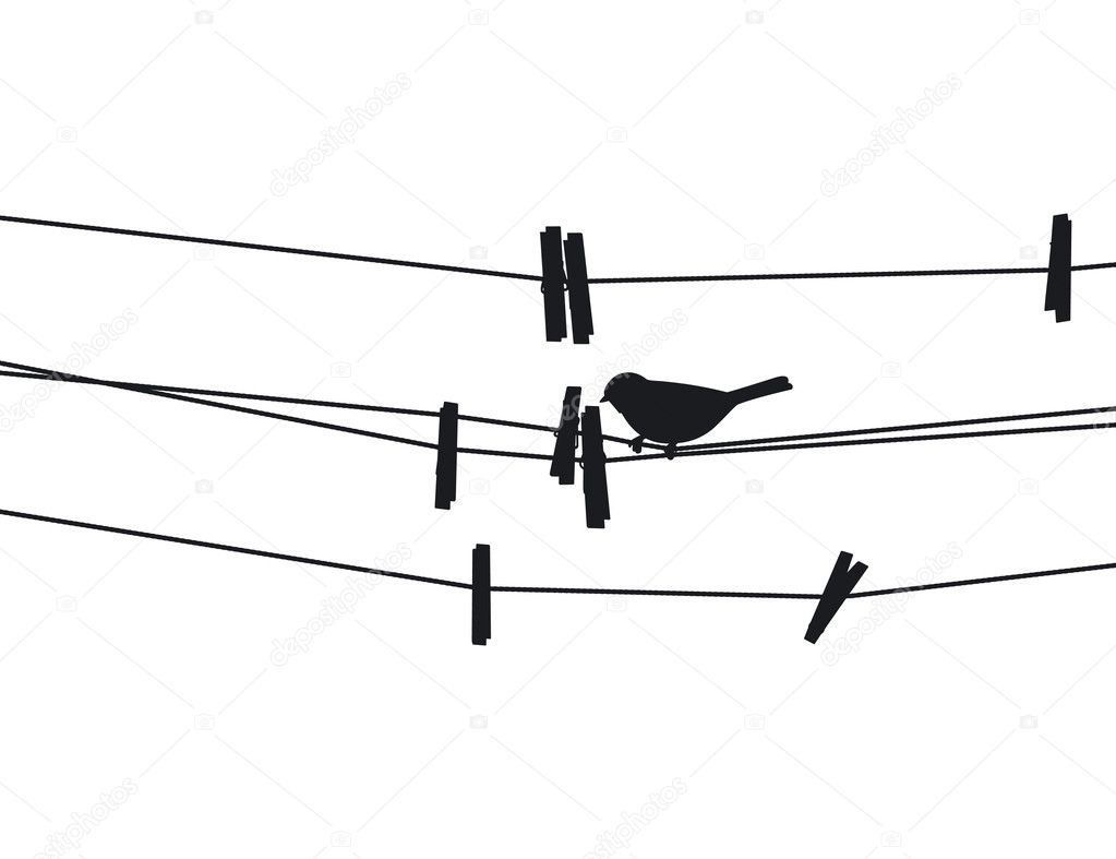 Bird sits on a rope next to the clothespins