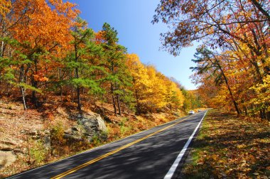 Road in the middle of the autumn forest
