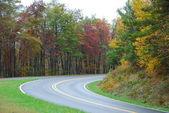 strada nella foresta in autunno