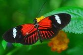 červený motýl na list