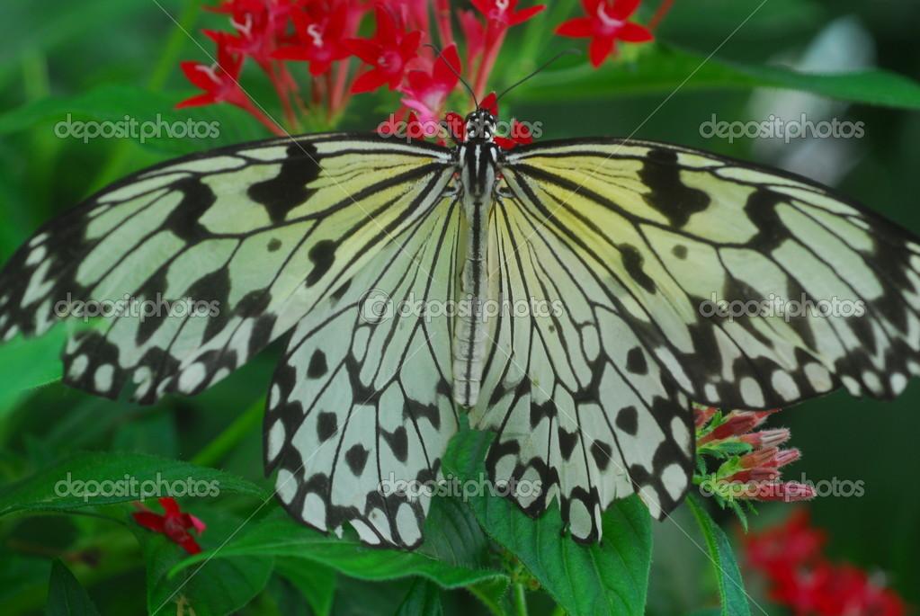 Eine Isolierten Erschossen Schmetterling Auf Blume Insekten Futtern