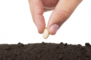Hand planting seed in soil