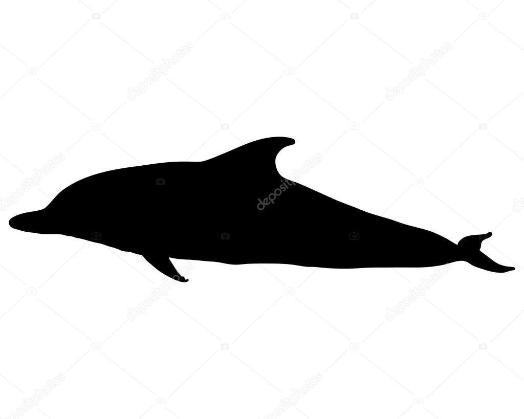 silhueta golfinho vetor de stock lantapix 43641281