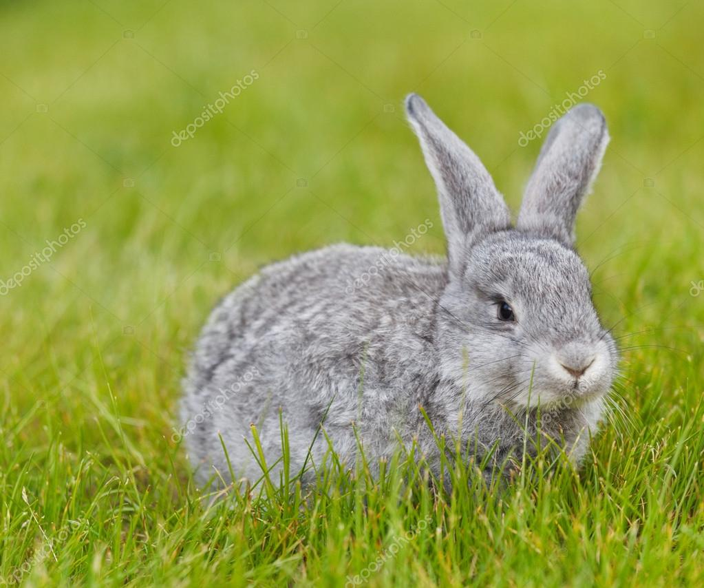 Cute little grey rabbit on green grass