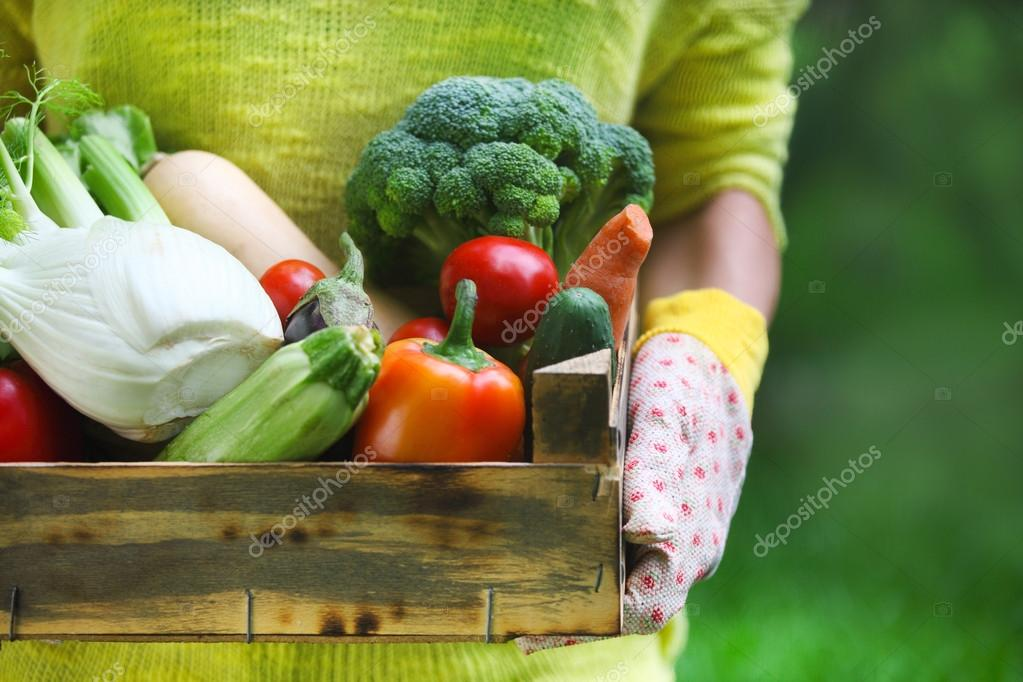 Woman wearing gloves with fresh vegetables in the box in her han