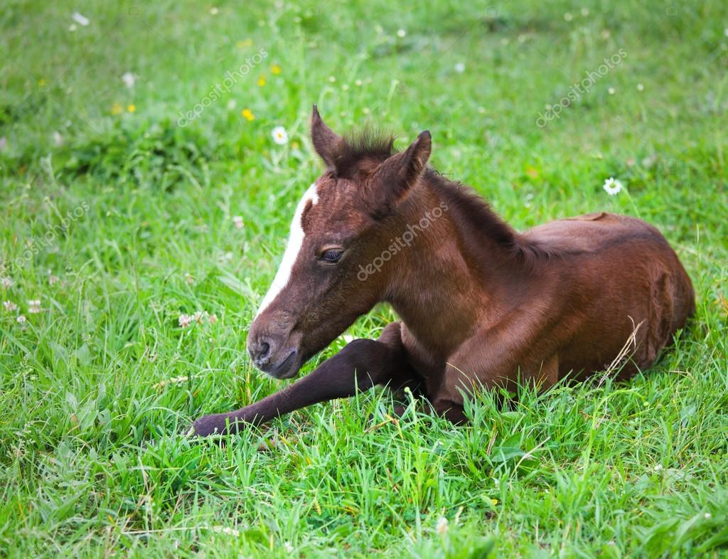 Newborn Baby Horse On The Green Grass Stock Photo C Dasha11 44162049