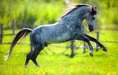 Horse gallops in springtime on field