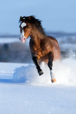 Horse running across the field in winter