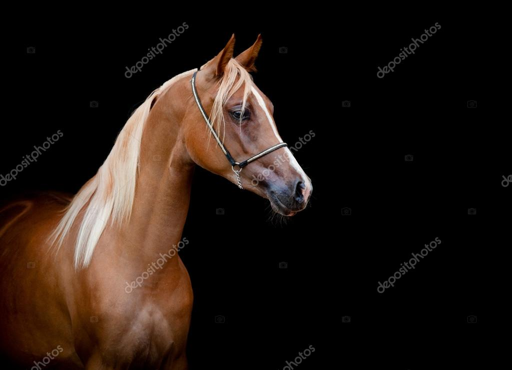 ᐈ Horses Heads Stock Pictures Royalty Free Horse Head Photography Download On Depositphotos