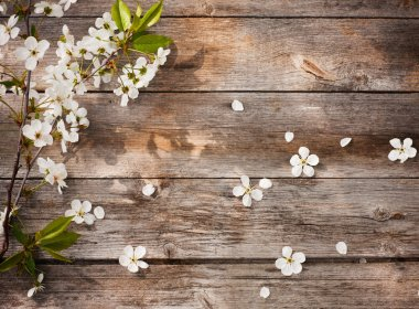 Spring flowers on wooden background stock vector
