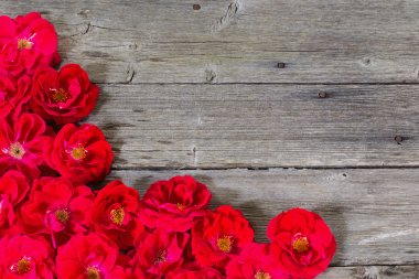 Rose on wooden background