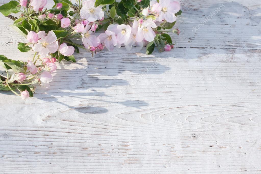Apple blossom on white wooden backgroun