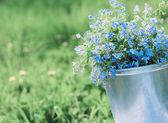 jarní modré květy